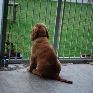 犬仲間のジャックラッセルが起こした事件
