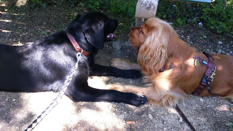 犬を飼っている人が経験するいくつかのトラブル