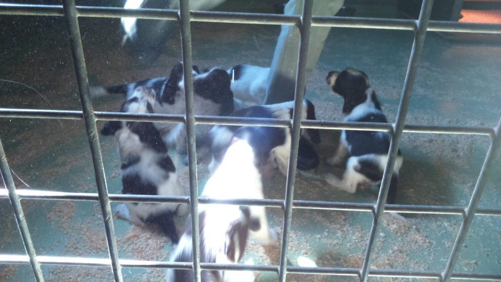 コロナパンデミックでペットの無責任な飼育増加