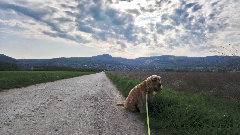 朝の散歩が気持ちいい季節
