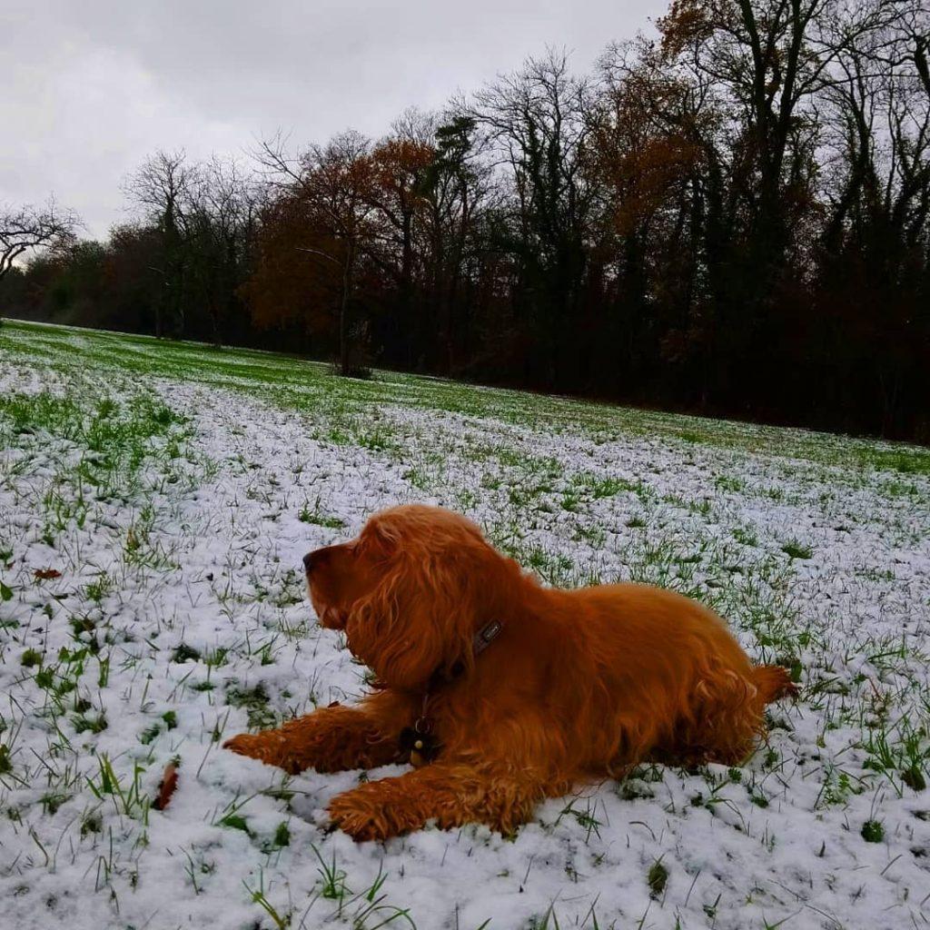 初雪ではしゃぐFino